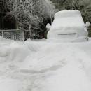 Merck/Arcoxia/snow.1
